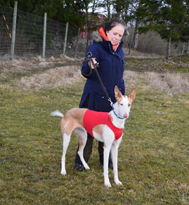 20190324-Godkaend-licens-Lure-Coursing-Licensgivare-Gunilla-Kock-Hansson-Kalo-Skilos-For-Whom-TheBell-Tolls-Fotograf-Kennel-Chiron.png